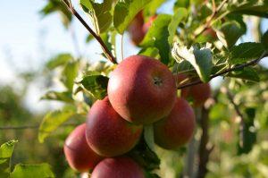 Obstbau Wenz